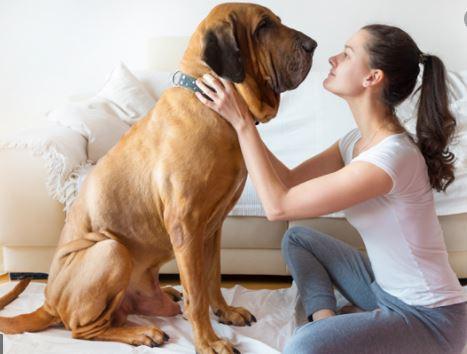 soñar con perros grandes